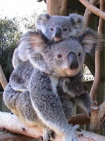 Brisbane: Top 10 Things to Do in Brisbane – TripAd…