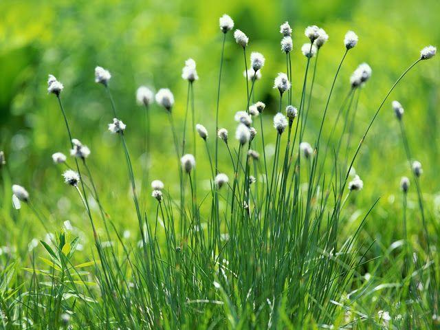 arte y jardinera diseo de jardines flores silvestres familia de las rosceas