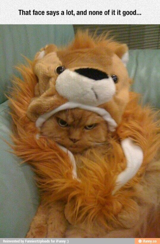 Orange grumpy cat