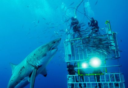 this is fun! ♥ shark  cage diving Cape Town