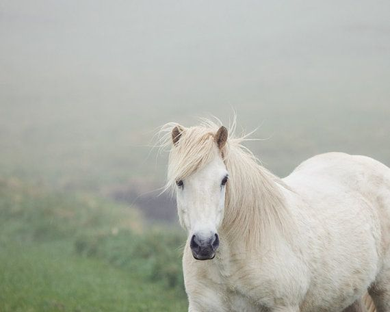 White Horse in Fog Nature Photography by EyePoetryPhotography