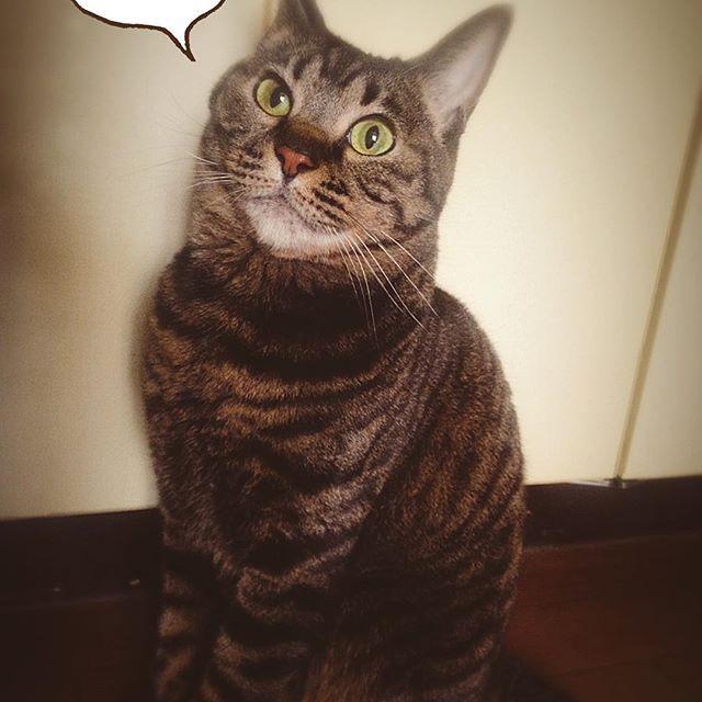 3/27mon☀️ おはようございます☻ . 無言の圧力💬 今日も のびのび 良い1日を♪ . #おはよう #朝 #ねこ #ネコ #猫 #キジトラ #愛猫 #にゃんこ #月曜日 #日常 #良い1日を #안녕 #아침 #고양이 #고등어태비 #냥이 #월요일 #일상 #좋은하루 #👍