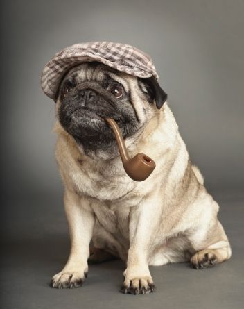 """Elementary, Dear Watson."" ~ Sherlock Pug"