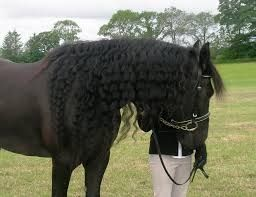 Beautiful Friesian Horse for adoption FOR SALE ADOPTION from Alberta Barrhead @ Adpost.com Classifieds > Canada > #88509 Beautiful Friesian Horse for adoption FOR SALE ADOPTION from Alberta Barrhead,free,canadian,classified ad,classified ads