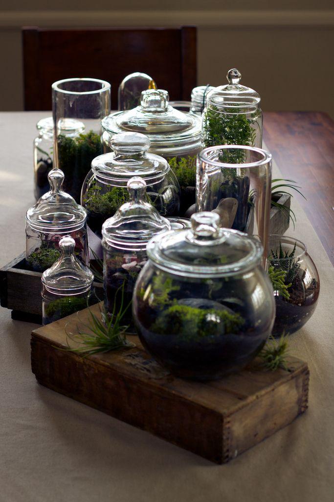 collection of terrarium jars