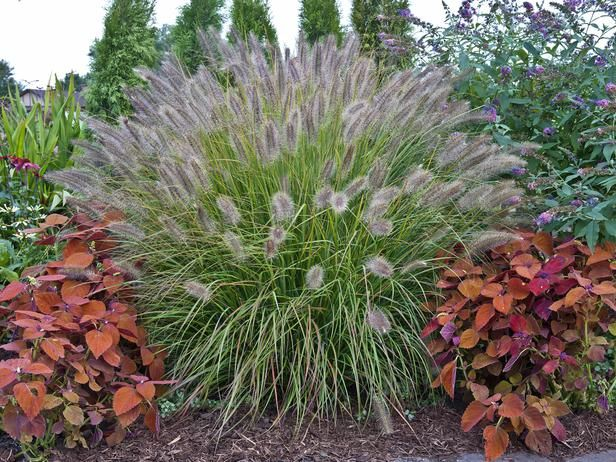 Types Of Ornamental Grasses Deer Autumn Leaves And Home