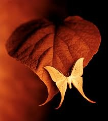 Butterfly on leaf: Luna Moth, Natural Beautiful, Autumn Leaves, Red Things, Butterflies, Burnt Orange, Colors, Cars Stickers, Macros Photography