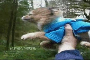 This majestic flying dog. | The 40 Greatest Dog GIFs Of All Time
