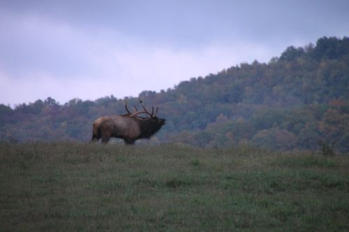 Bugle: Fall Colors, Boxley Valley, Gods Creatures