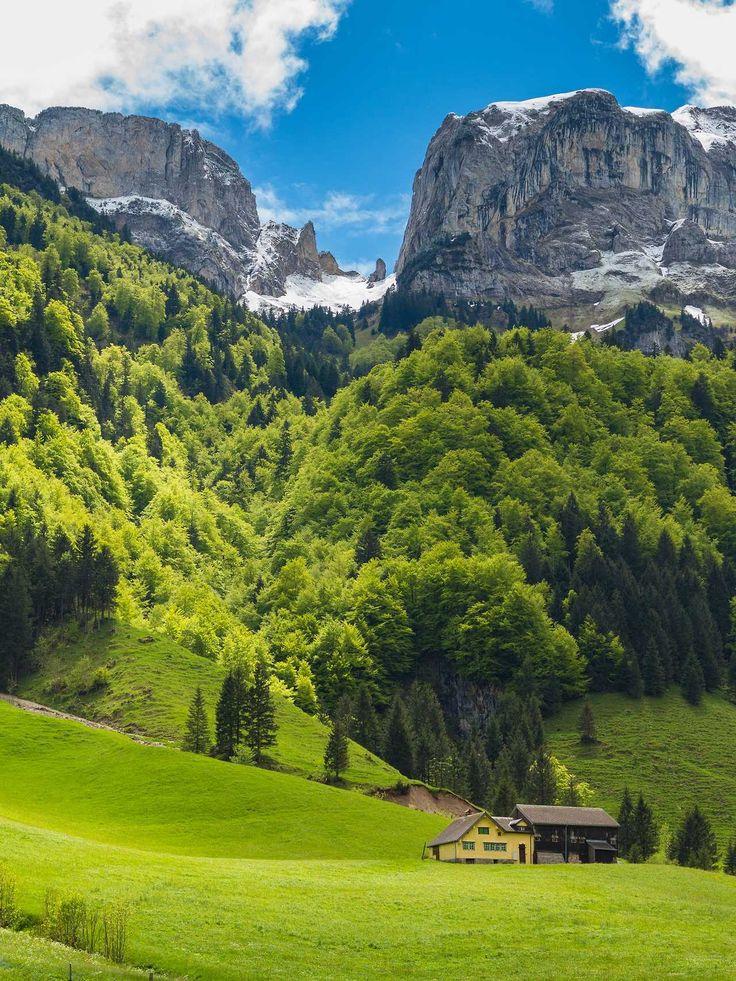 Фотообои фирмы швейцарии