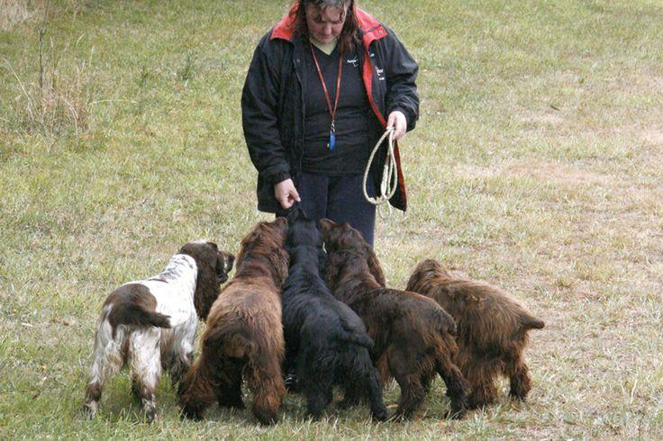 Aussie Truffle Dogs