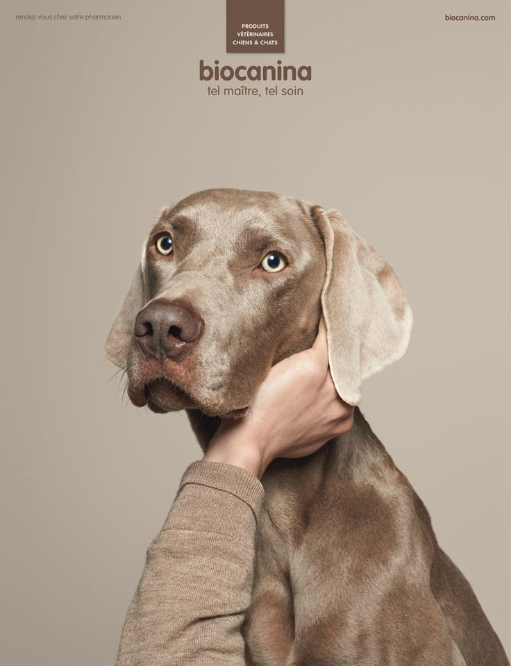Publicité - Creative advertising campaign - Biocanina: Tel maître, tel soin