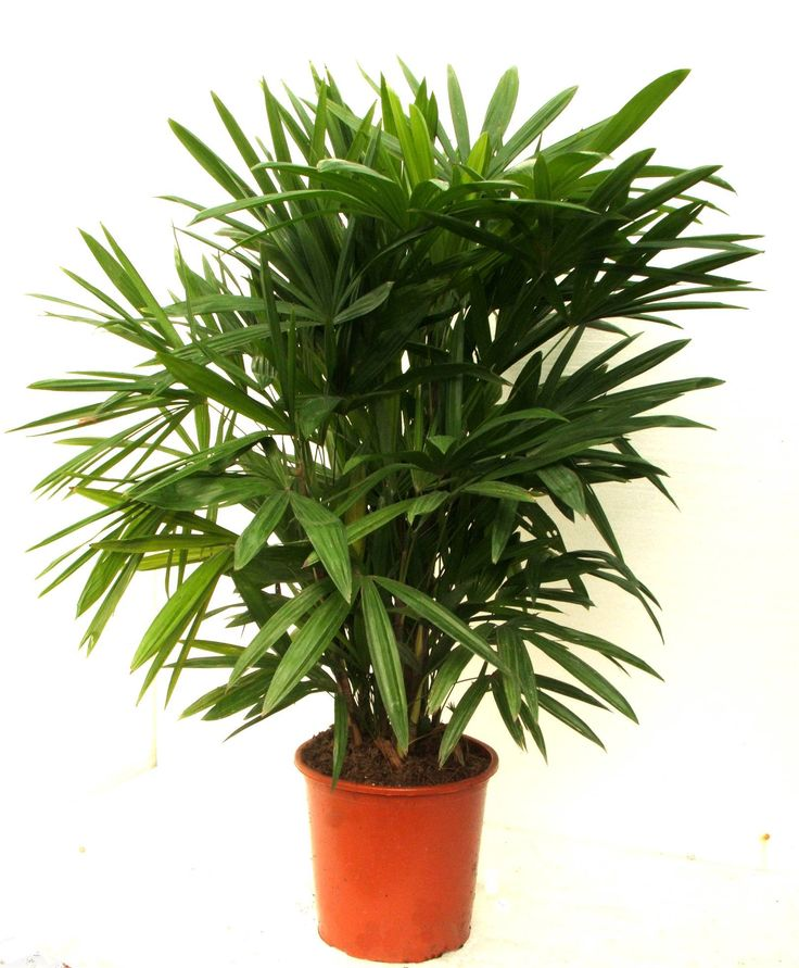 House Plants For Shady Rooms: 13 Best Cat-friendly Plants Images On Pinterest