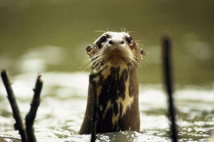 animals of the amazon | ... Conservation photography,Rainforest animals, Rainforest photos, Tours