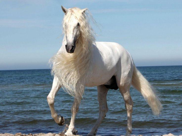 1000 idées sur le thème Most Beautiful Horses sur Pinterest ...