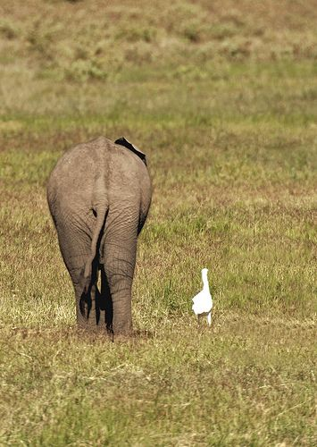 The Odd Couple      in Chicks Are Chocolate,Wild Animals Are Waborita    Cute funny elephant - You're going to love my parents.