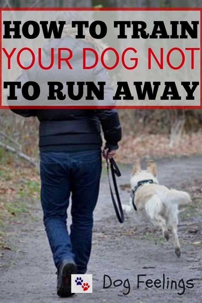 electric training collar, training 12020, dog training clickers at walmart, dog …