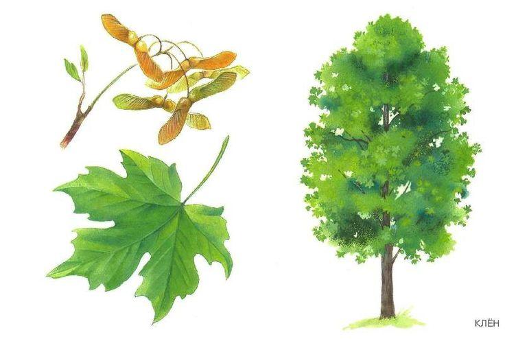 drzewo 6