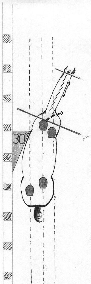 Schulterherein