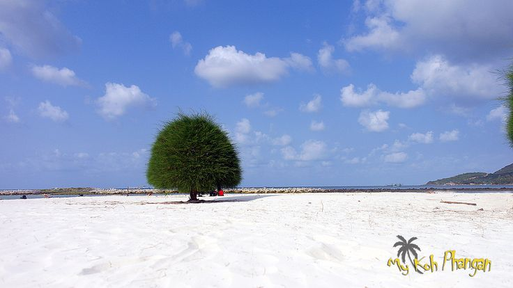 Malibu beach, next to Chaloklam, in the north of Koh Phangan. Beautiful white sand beach with funny shaped trees.
