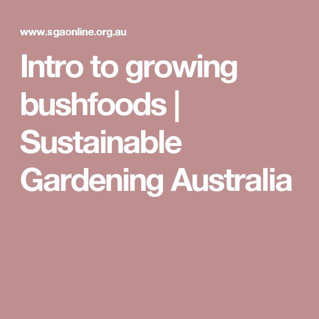 Intro to growing bushfoods | Sustainable Gardening Australia