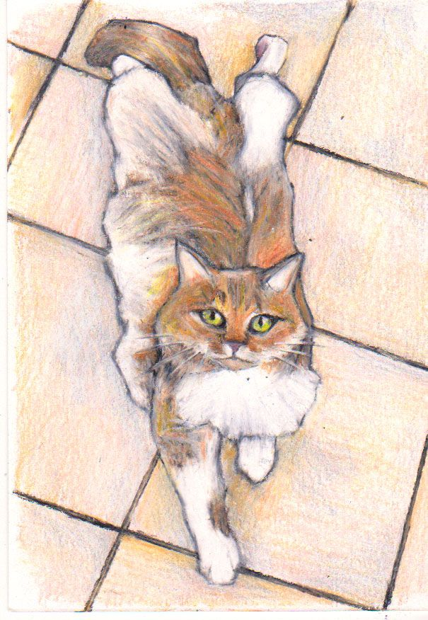 Cat art. Ted the cat. Colour pencil on white card. Order custom pet art here... https://www.etsy.com/listing/216347712/custom-pet-portrait-by-jim-griffiths?ref=shop_home_feat_1