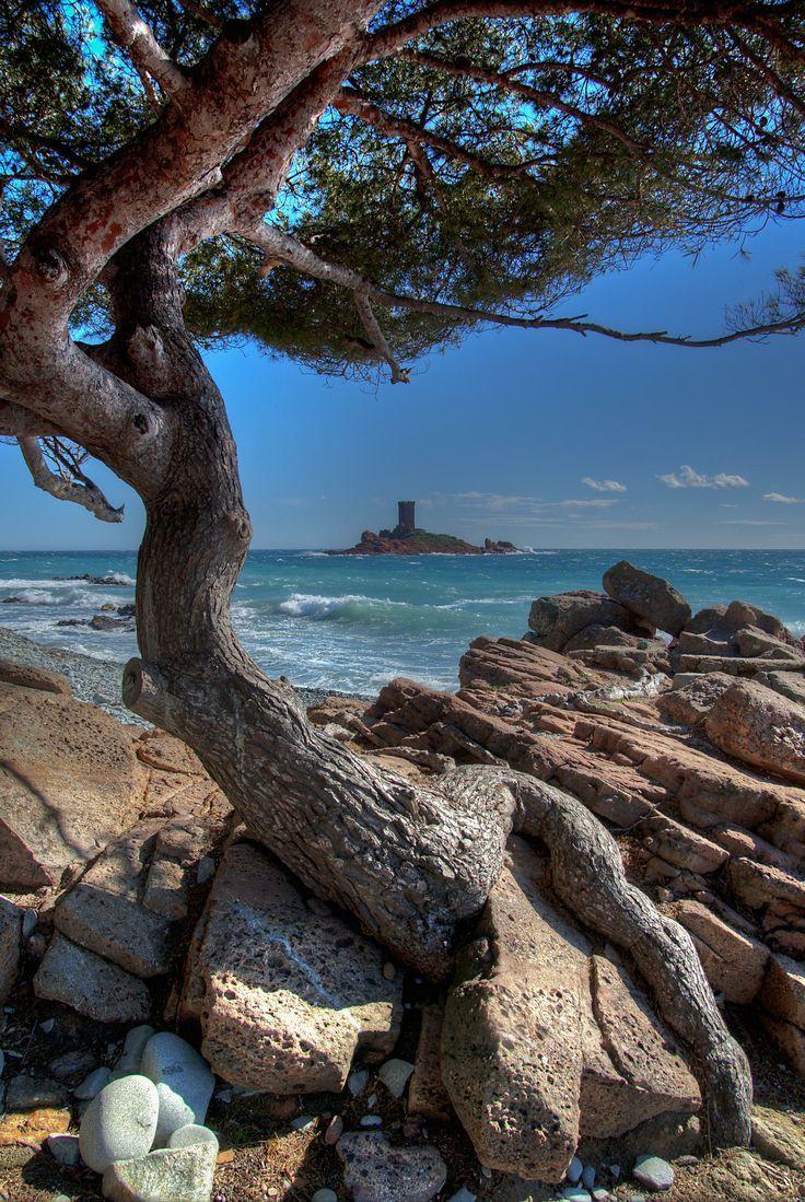 Corse Island, France                                                                                                                                                                                 Plus