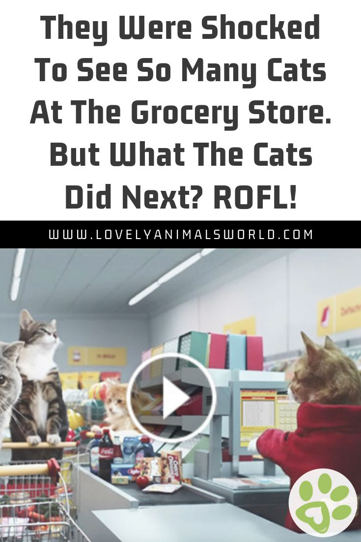 They Were Shocked To See So Many Cats At The Grocery Store. But What The Cats Did Next? ROFL!