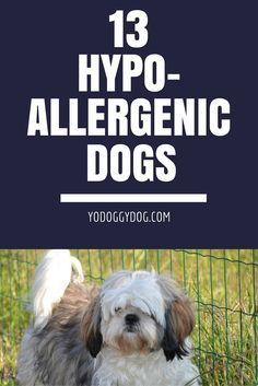 Just because you're allergic to dogs doesn't mean you can't one—you just have to pick the right one. There are tons of beautiful hypoallergenic dog breeds.  cute dogs, funny dogs, dog memes, dog love, dog quotes, dog tips, hypoallergenic dogs