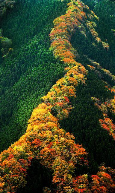 紅葉が見ごろ、緑とのコントラスト 奈良・ナメゴ谷