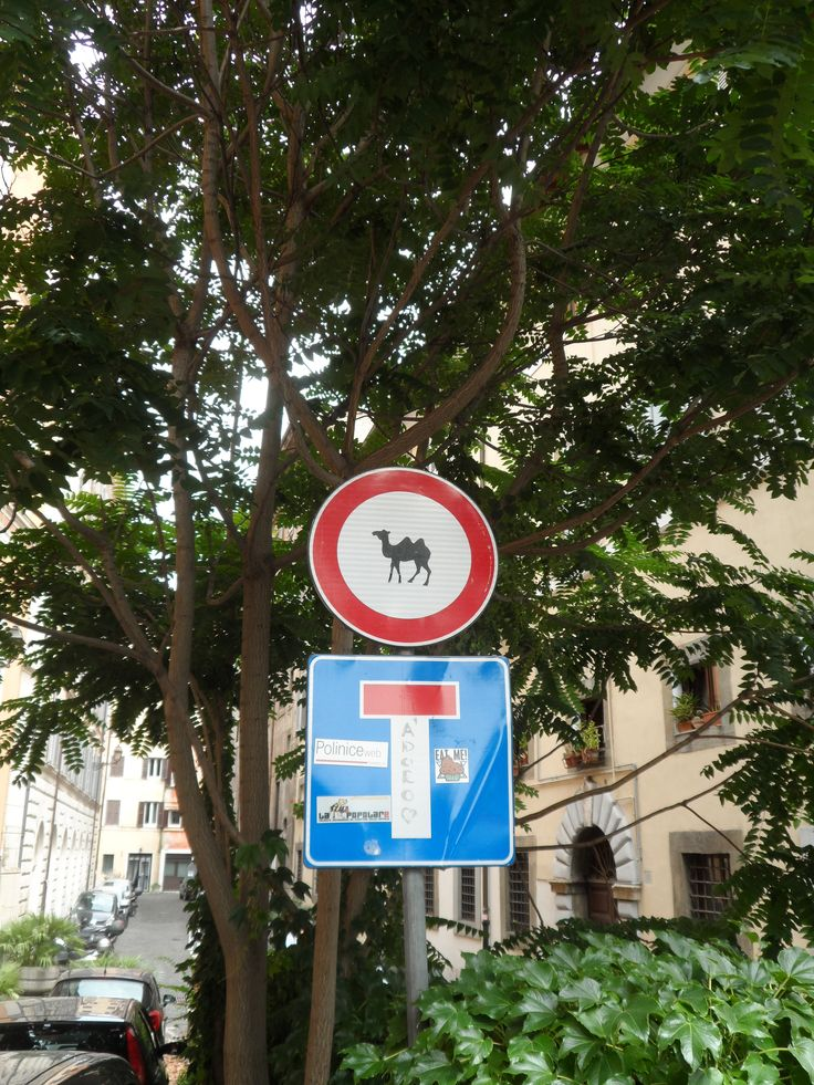 Spotted in Rome