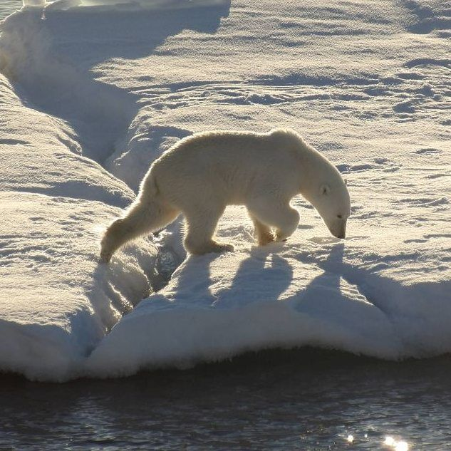 Polar bear on drift ice in northeast greenland. Perfect wildlife spotting moment  . . . #polarbear #eisbär #arctic #driftice #northeastgreenland #greenland #bear #eisschollen #nordostgrönland #grönland #greenland #expedition #fram #hurtigruten #arktis #bearwatching #bears #osopolar #nature_seekers #naturephotography #wildlife #wildlifephotography #bestnatureshot #bestwildlife #collectmomentsnotthings #wildlifespotting #travelinspired #reisebericht #reiseblogger_de