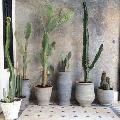 Walls of cacti..