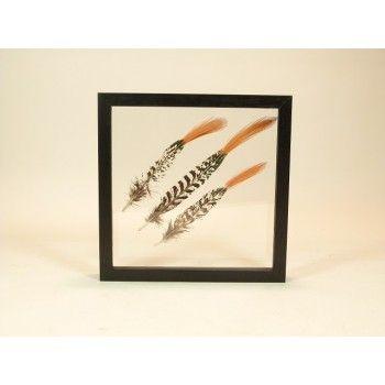 Dubbelglas lijst met Lady amherst fazant veren