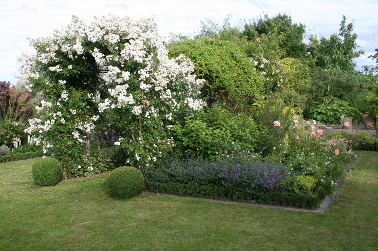 rose guirlande d 39 amour louis lens roses in our garden. Black Bedroom Furniture Sets. Home Design Ideas