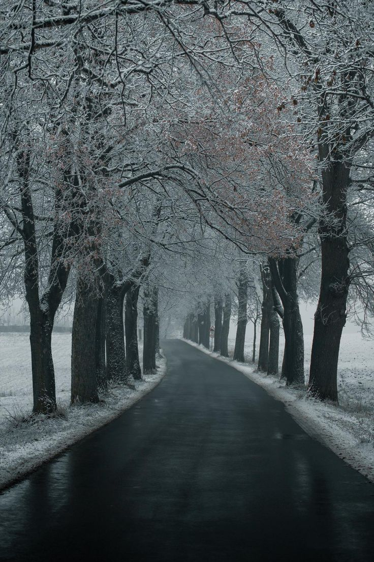 #cold #winter #avenue #snow #bavaria #franconia www.artechs.eu