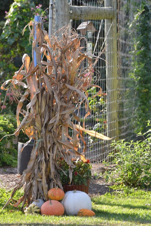 Beautiful Fall Decorations Made With Dried Corn And Corn