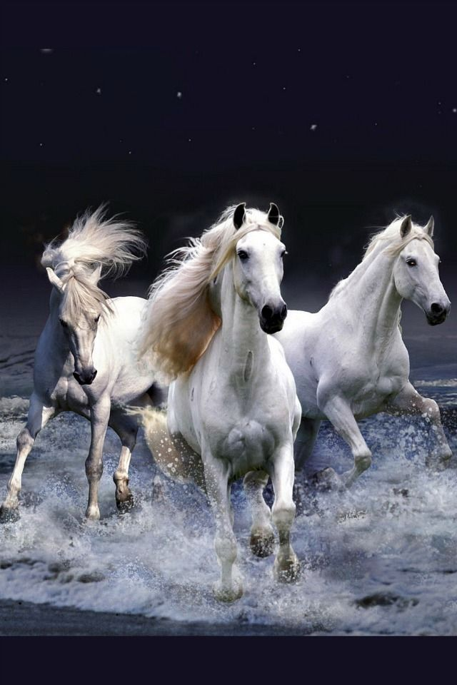 White Horses 3D IPhone Wallpapers