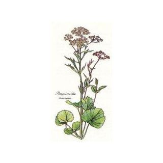 Piante officinali :: Anice verde semi (Pimpinella anisum L.) - Erboristeria Sauro - vendita online erbe officinali e preparati fitoterapici.Rimedi salutistici - Laboratorio d'Erbe Sauro - promozioni - sconti