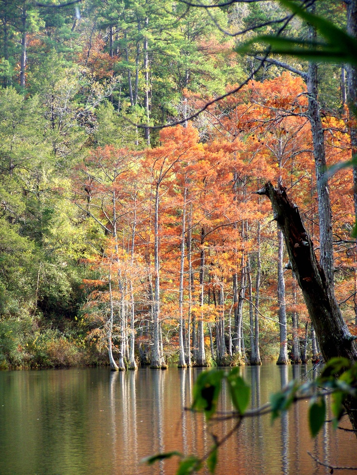 36 Best State Park Beavers Bend Images On Pinterest