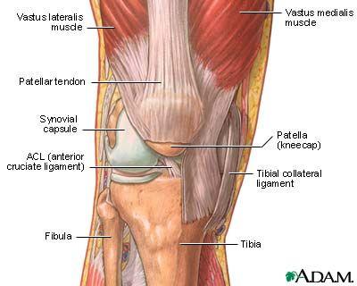 Back 0f knee diagram product wiring diagrams 108 best knee pain images on pinterest exercises home remedies rh pinterest com knee tendons diagram knee pain symptoms ccuart Images