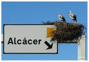 Alcácer do Sal , Storks made their nest on road signs