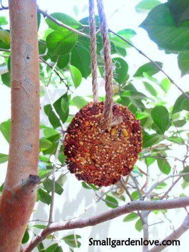 DIY bird treatsFingers Food, Treats Diy, Free Food, Birds Seeds, Seeds Treats, Diy Birds Treats, Seeds/Plant Diy, Yummy Diy, Feathers Friends