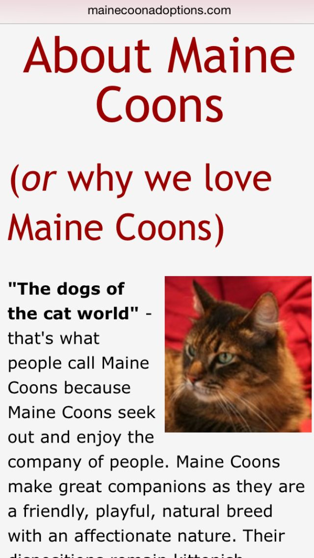 Read all about #MaineCoon #cats and why we love them!  http://mainecoonadoptions.com/aboutmainecoons.shtml
