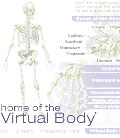 Home of the Virtual Body....neat site!