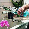 Orchid Care Tips: Fertilizer