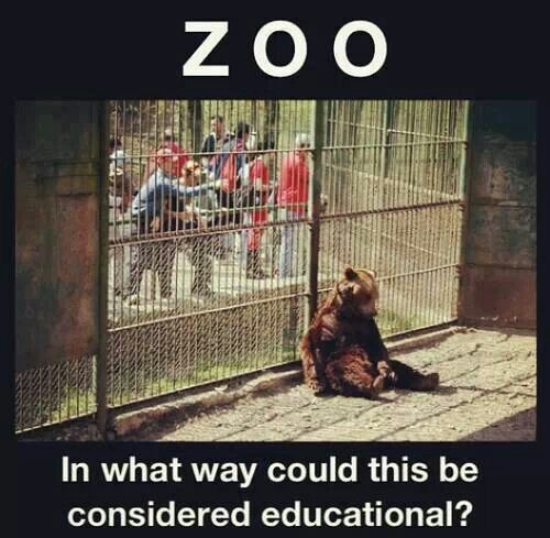 the gurus and additionally downsides connected with zoos essay or dissertation examples