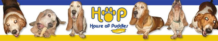 House of Puddles.  A home for elderly Basset hounds to live out their lives with love and compassion.