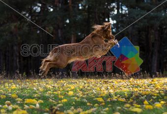 stock photo of active young dog walks in the autumn forest