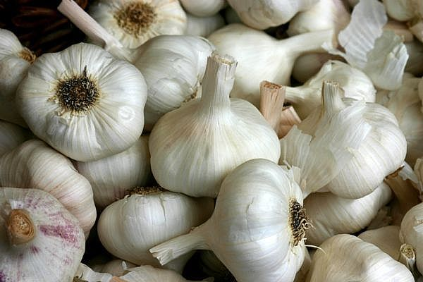 SO many benefits of garlic!  Consuming garlic helps protect against atherosclerosis and heart disease, helps in decreasing LDL cholesterol and raises HDL, helps to lower blood pressure, has favorable effects on blood lipids and has been used through history to treat infections such as colds, flu, stomach viruses.    Garlic also appears to offer protection against some cancers.  Studies have shown that as few as two or more servings of garlic a week may help protect against colon cancer.